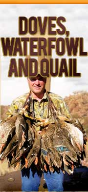 Dove, Waterfowl and Quail
